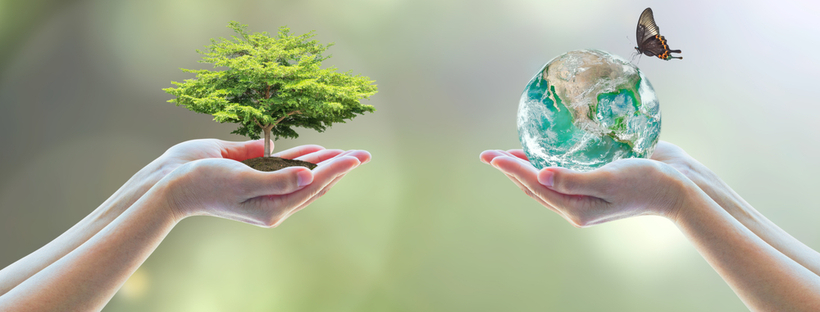 The Financial Advisor's Role in Sustainable Investing