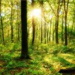 The Future of … Afforestation